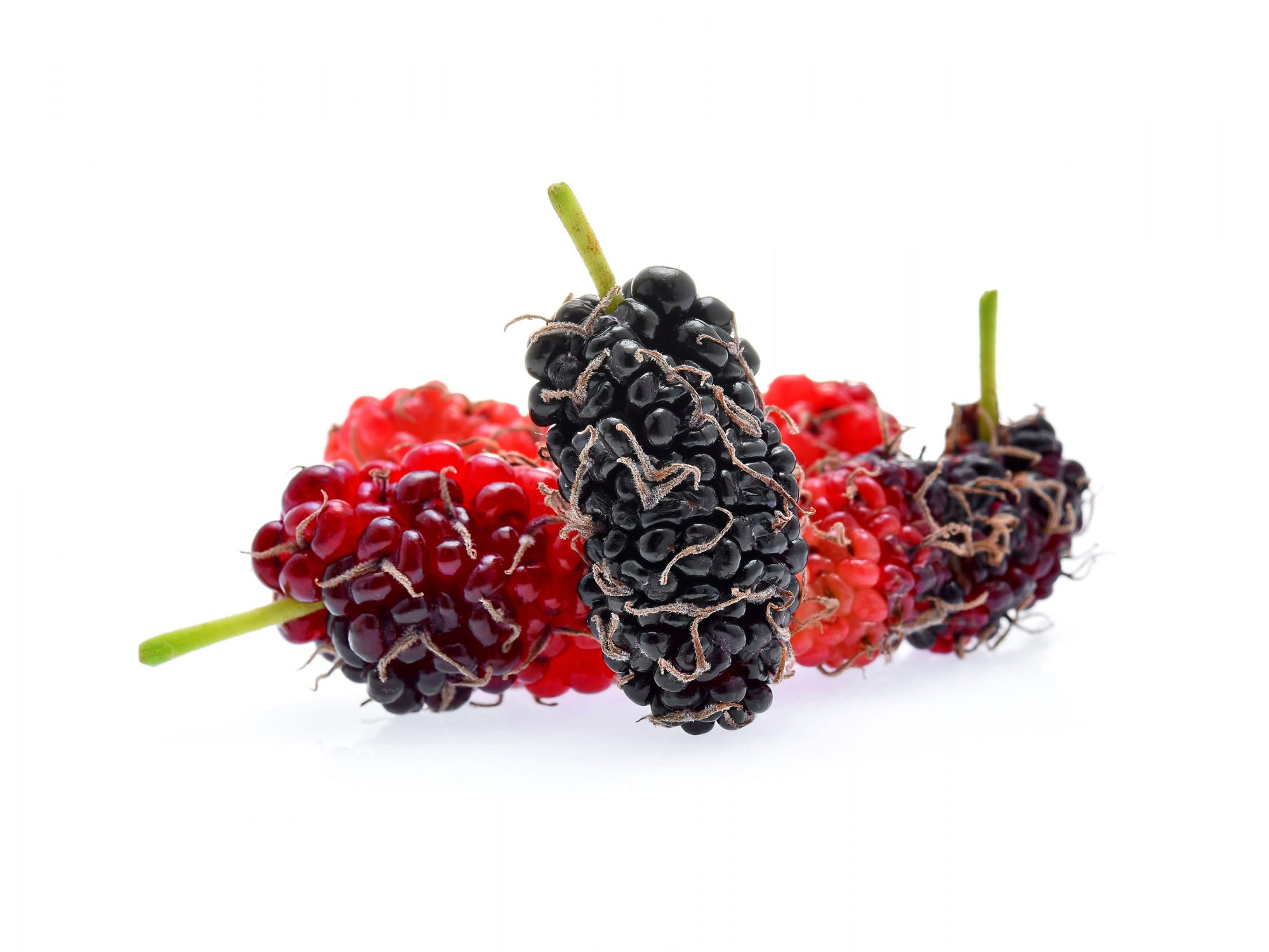 mulberries on white background