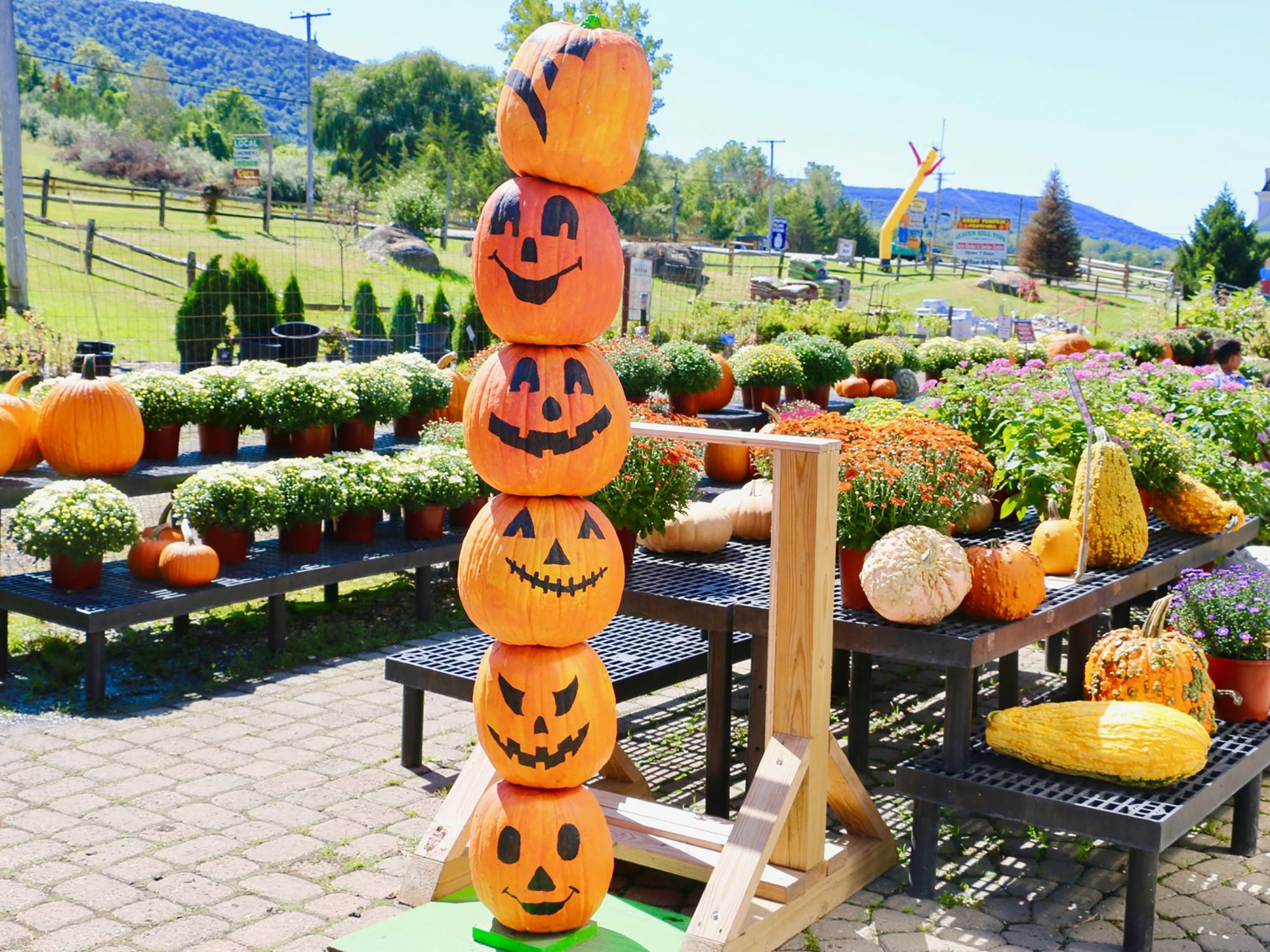 Pumpkins at Heaven Hill Farm