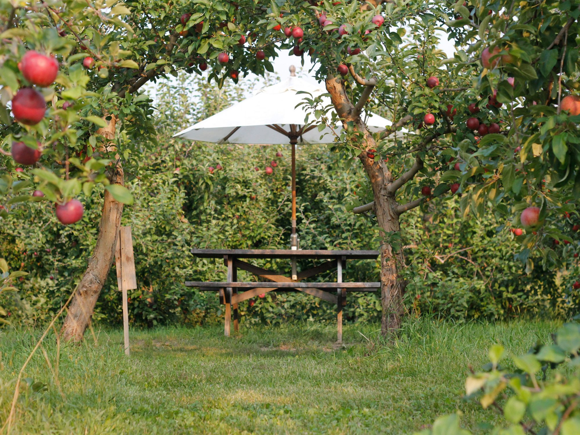 Shelburne Orchards Picnic Table