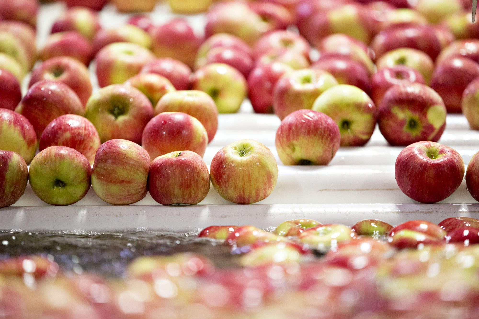 Honeycrisp apples moves through a wash machine at an orchard in Michigan, U.S. Photographer: Daniel Acker/Bloomberg
