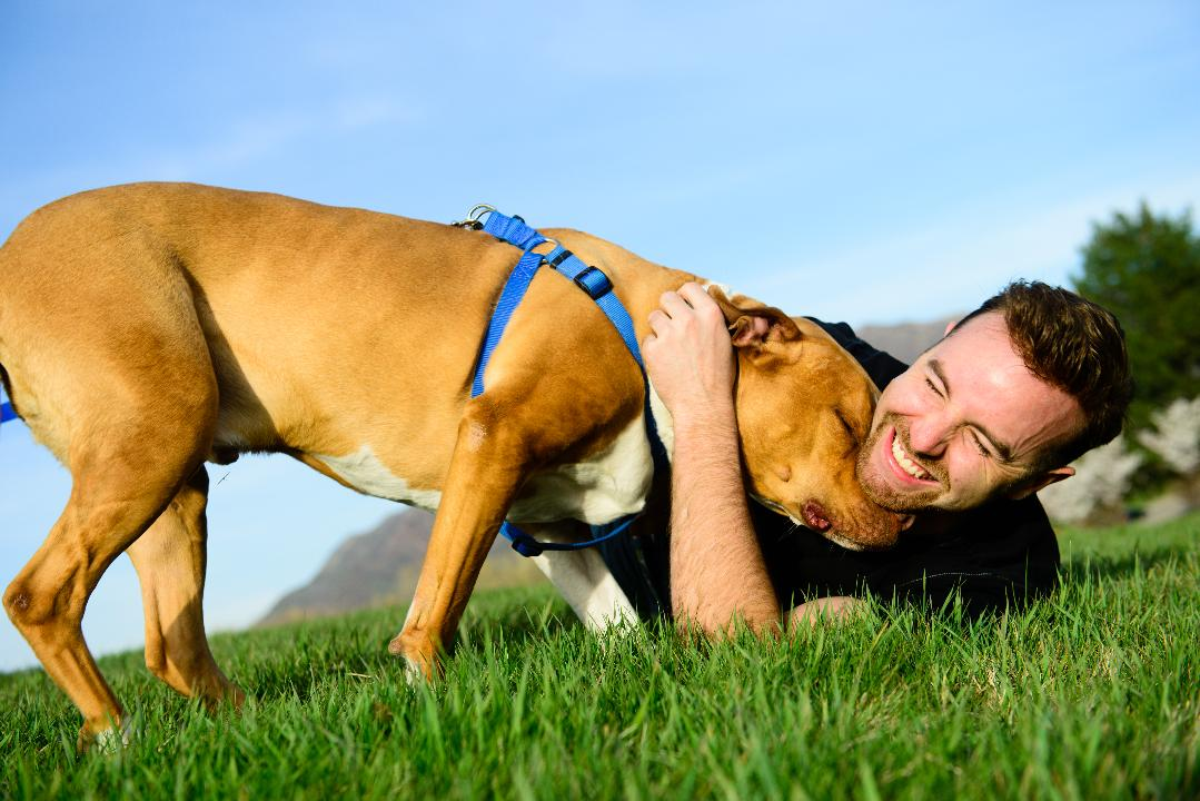 Does Your Dog Nuzzle? The Many Meanings of This Sweet Behavior