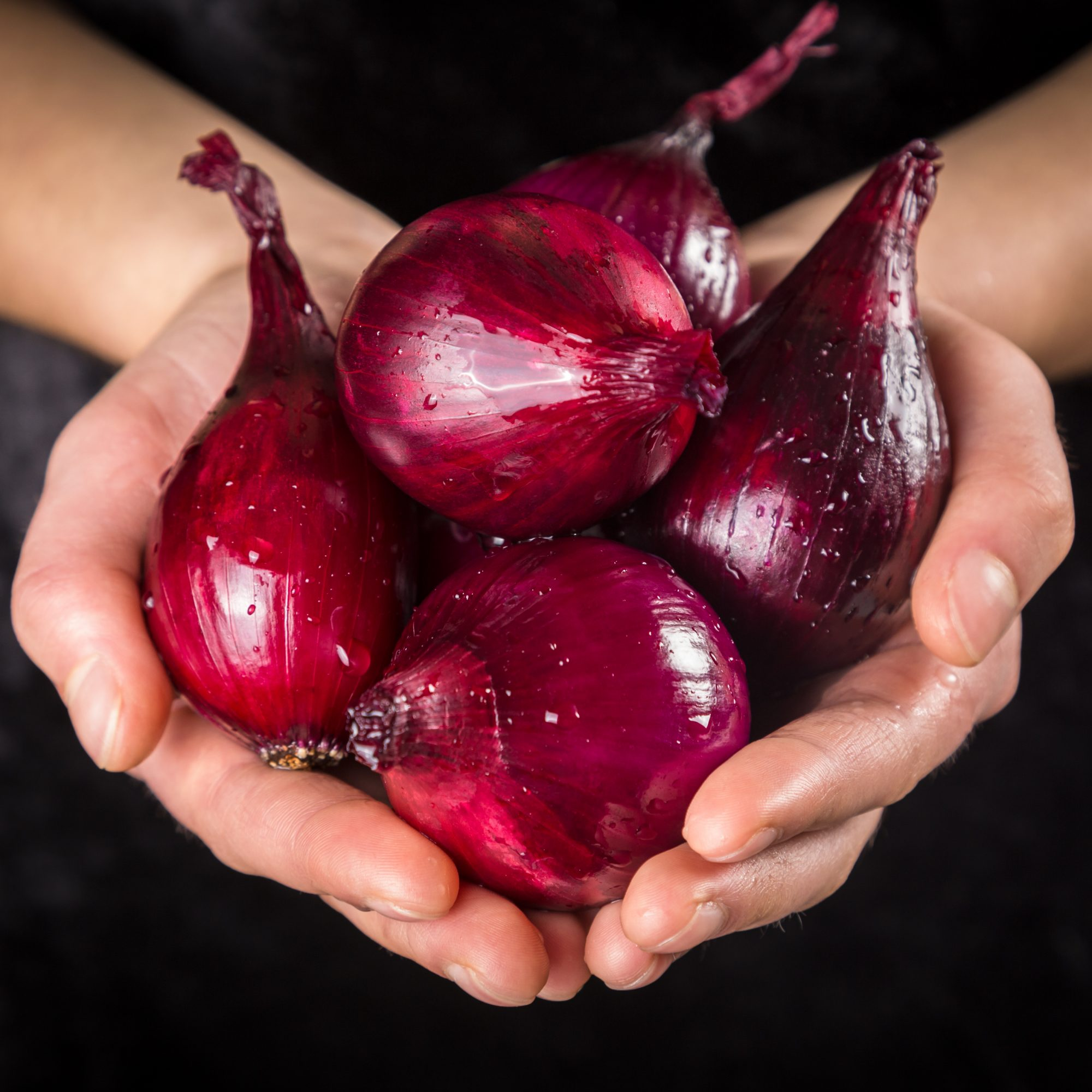 Red onion bulbs with water drops