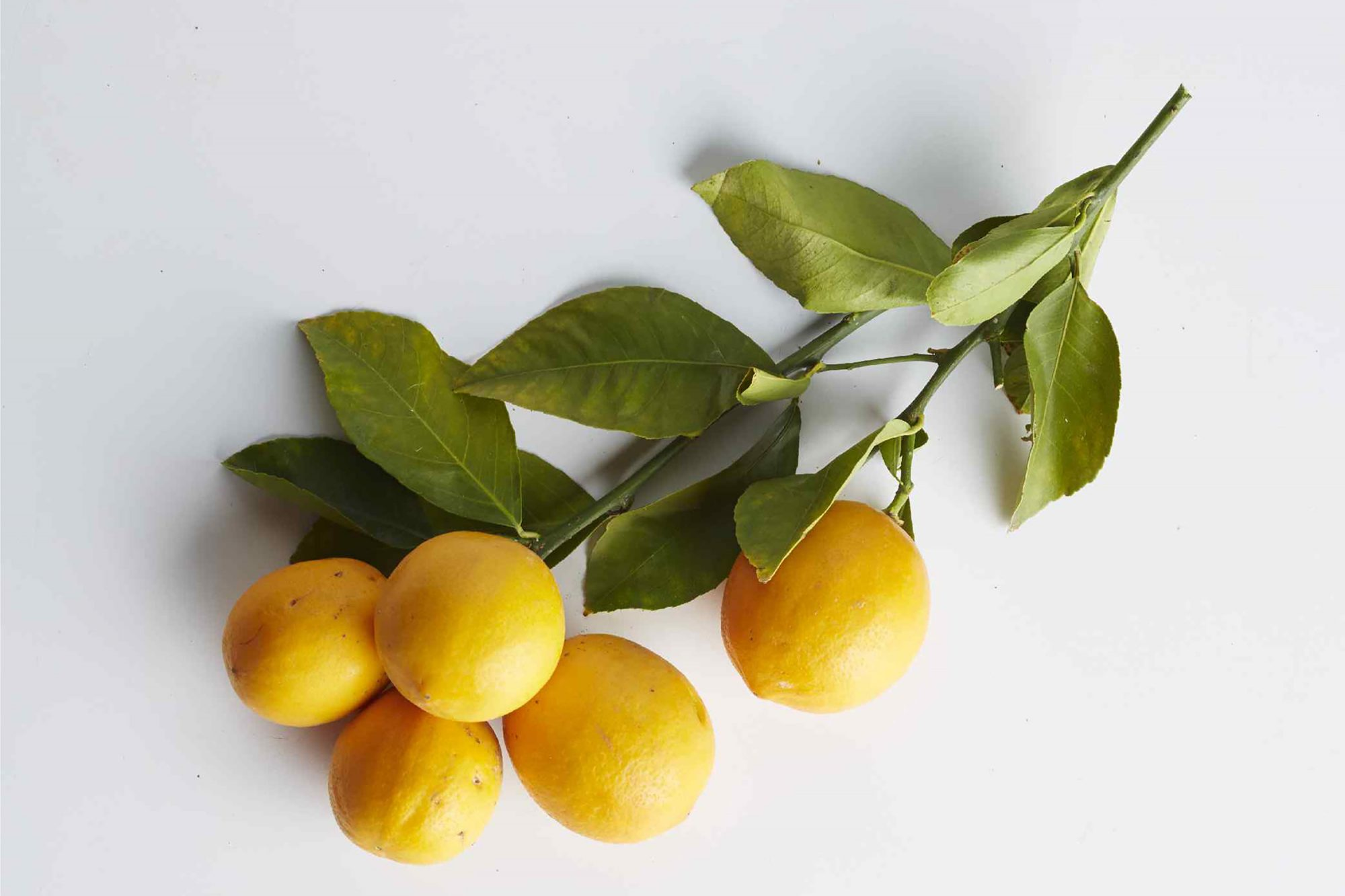What Is a Meyer Lemon and How Is It Different From a Regular Lemon?