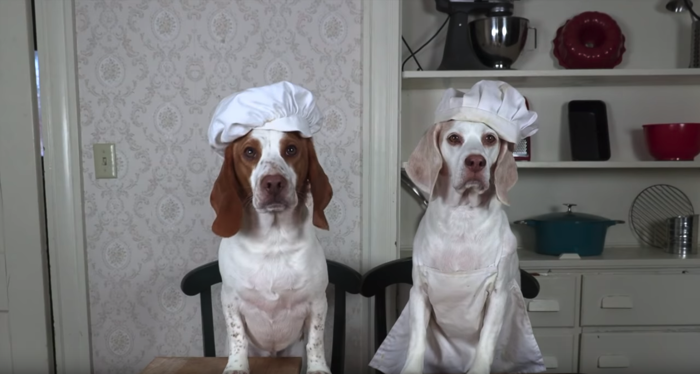 Maymo and Potpie in Chef Hats