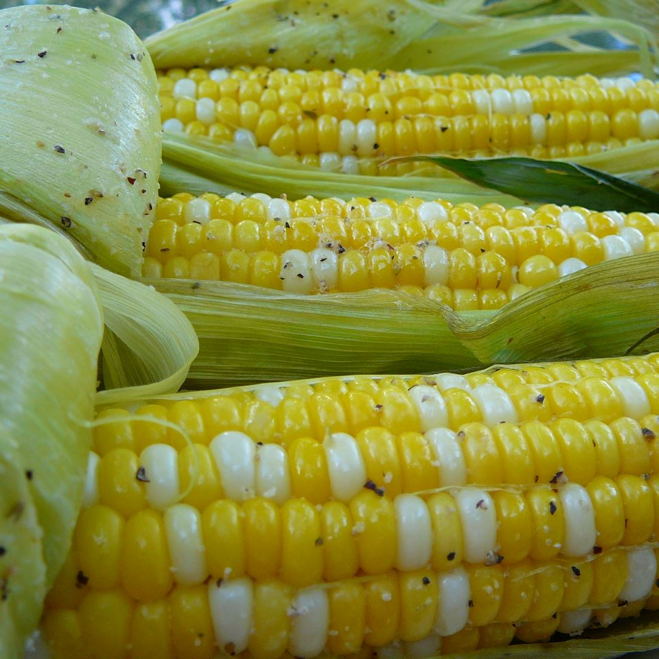 three ears of yellow and white kernel corn with the husks pulled back