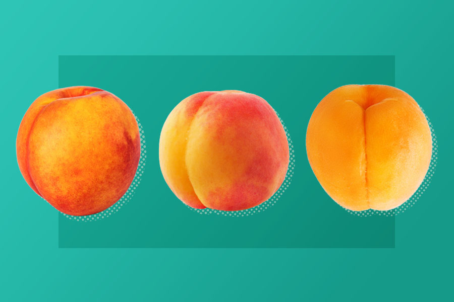 Peach, nectarine, and apricot on teal background