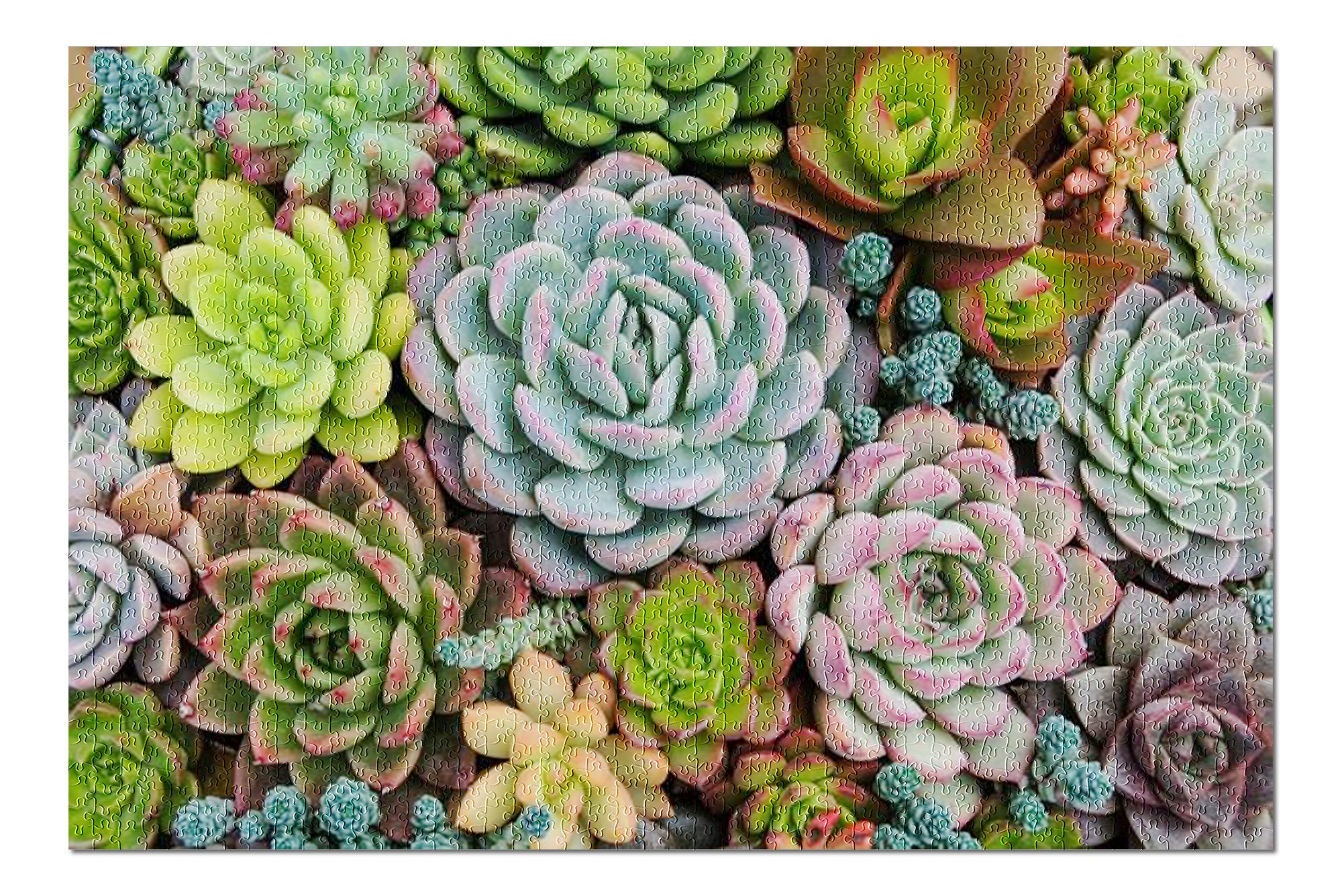 Arrangement of Many Colorful Succulents in a Planter
