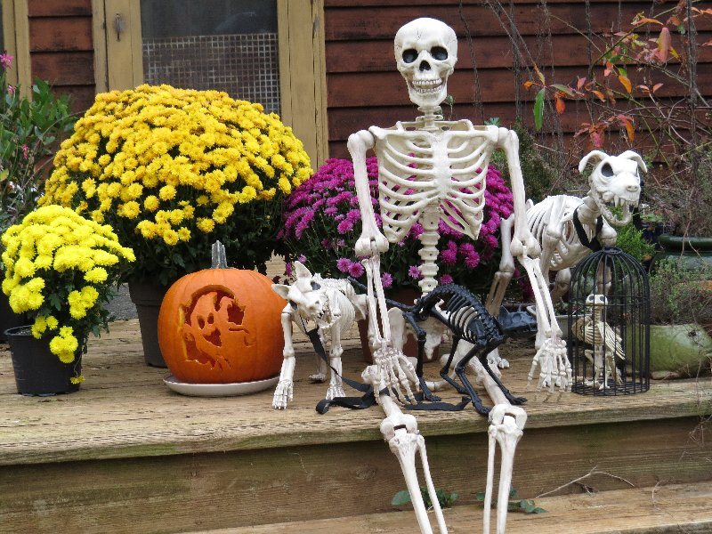 human skeleton decoration with skeleton decorations of pets