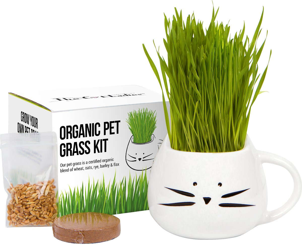 White mug shaped like a cat with pet grass growing out