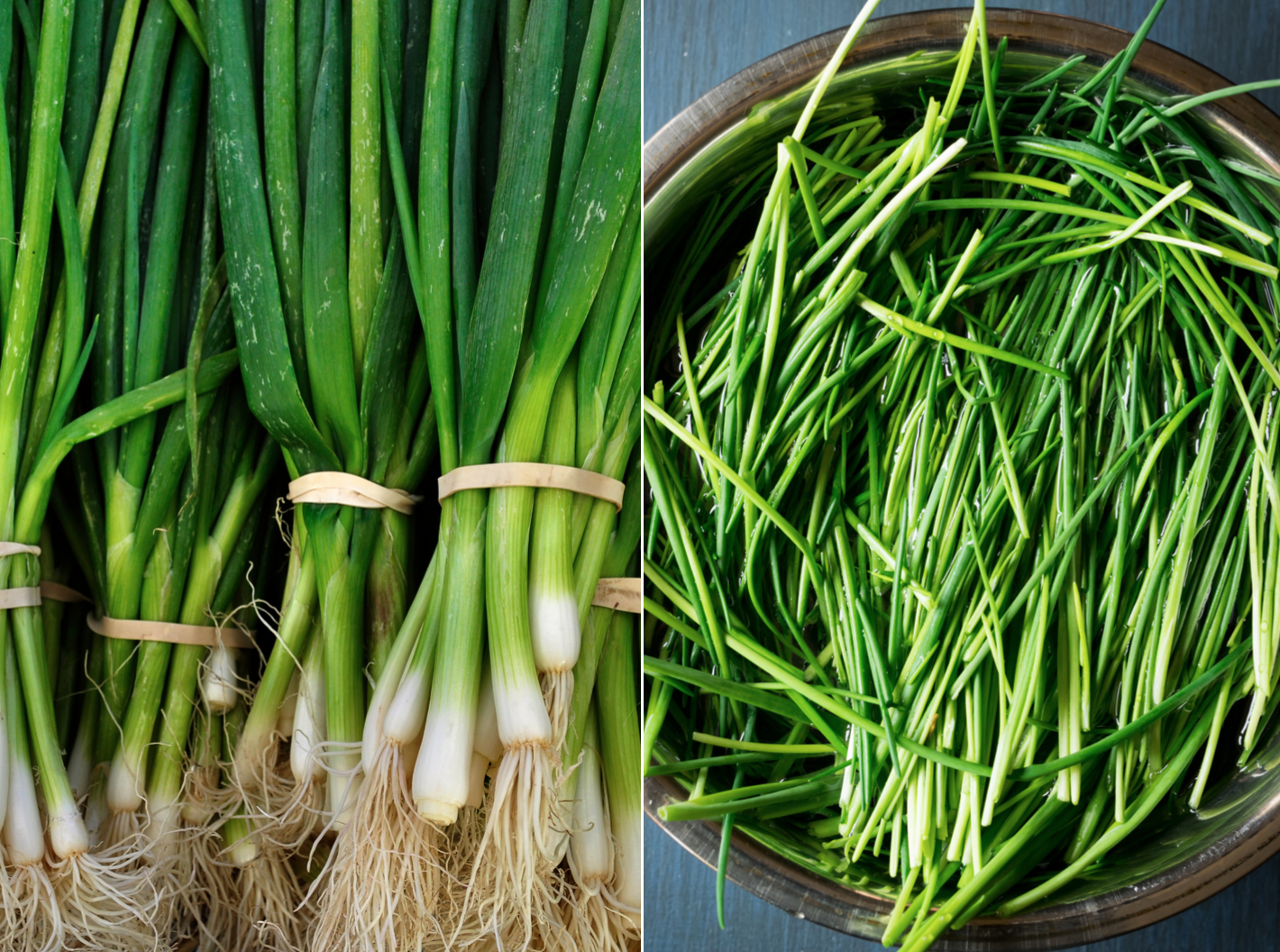 side by side photo of fresh whole green onions and fresh whole chives