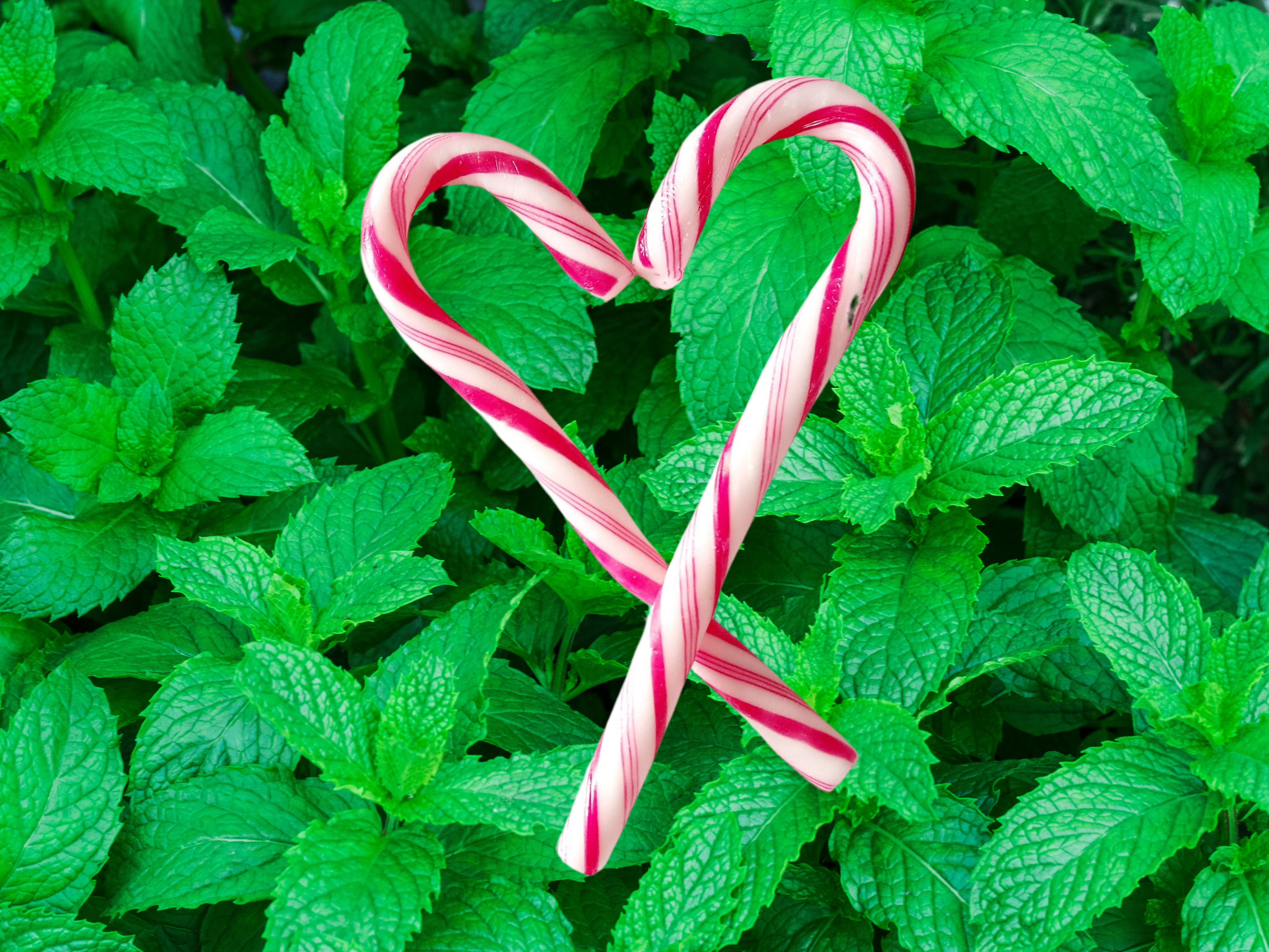 spearmint background with candy canes