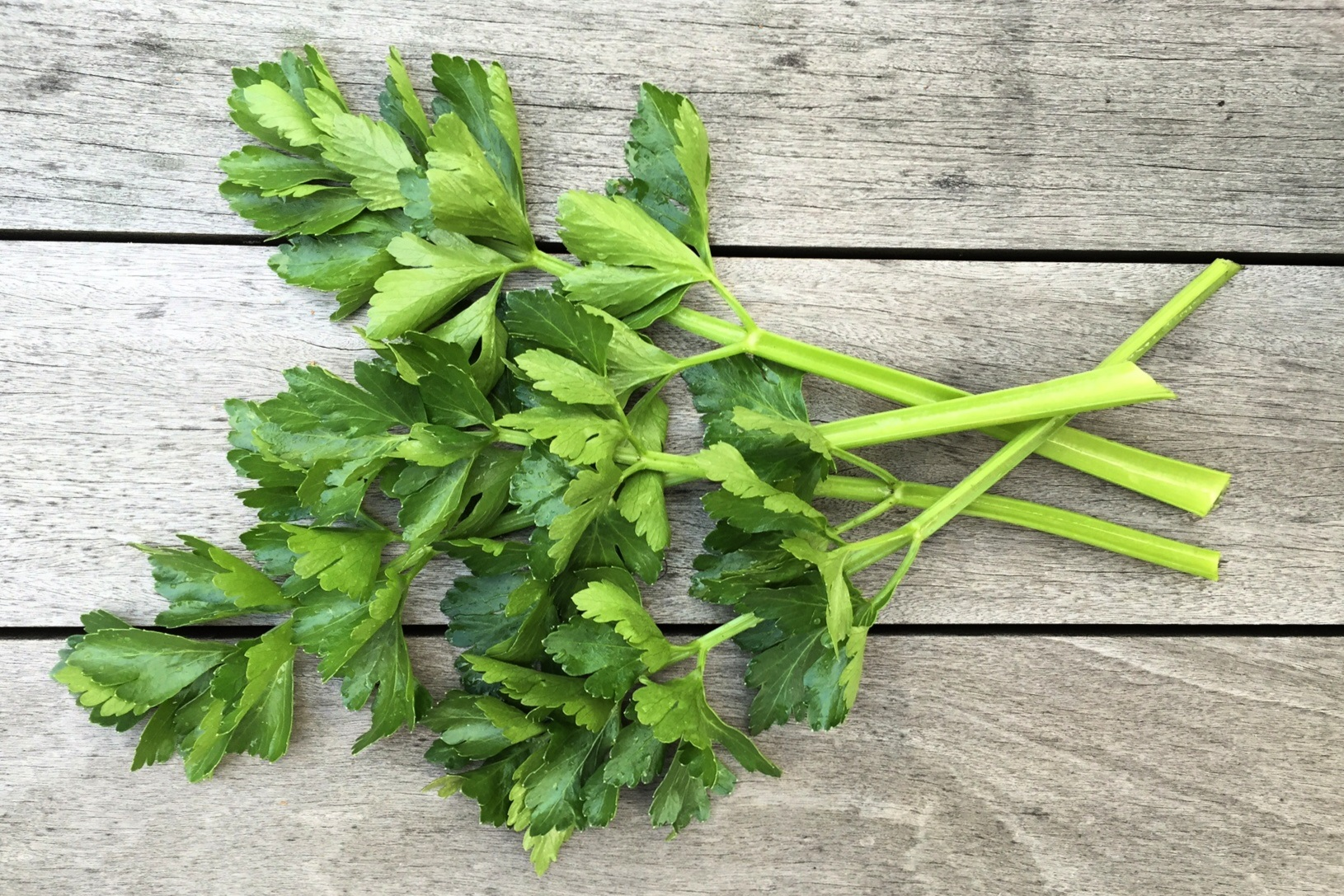 homegrown celery stalks and leaves
