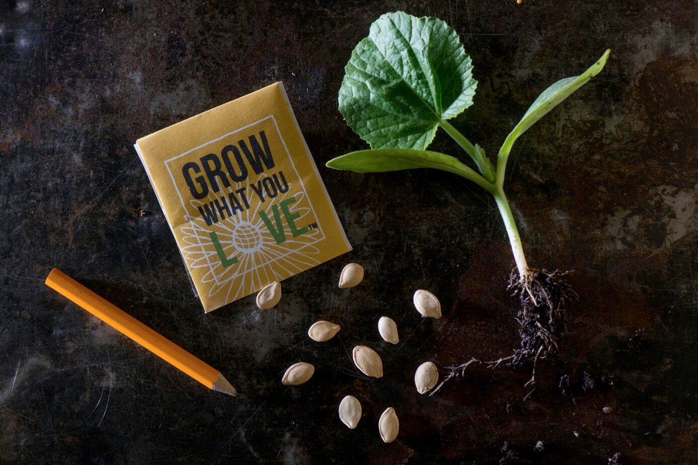 overhead shot of packet of plant seeds and a plant seedling