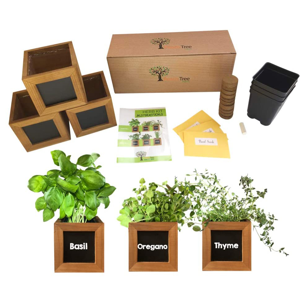 The 9 Best Indoor Herb Growing Kits for 9   Allrecipes