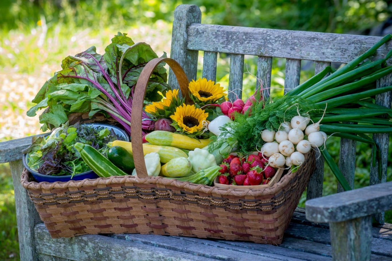basket of homegrown produce on a weathered garden bench
