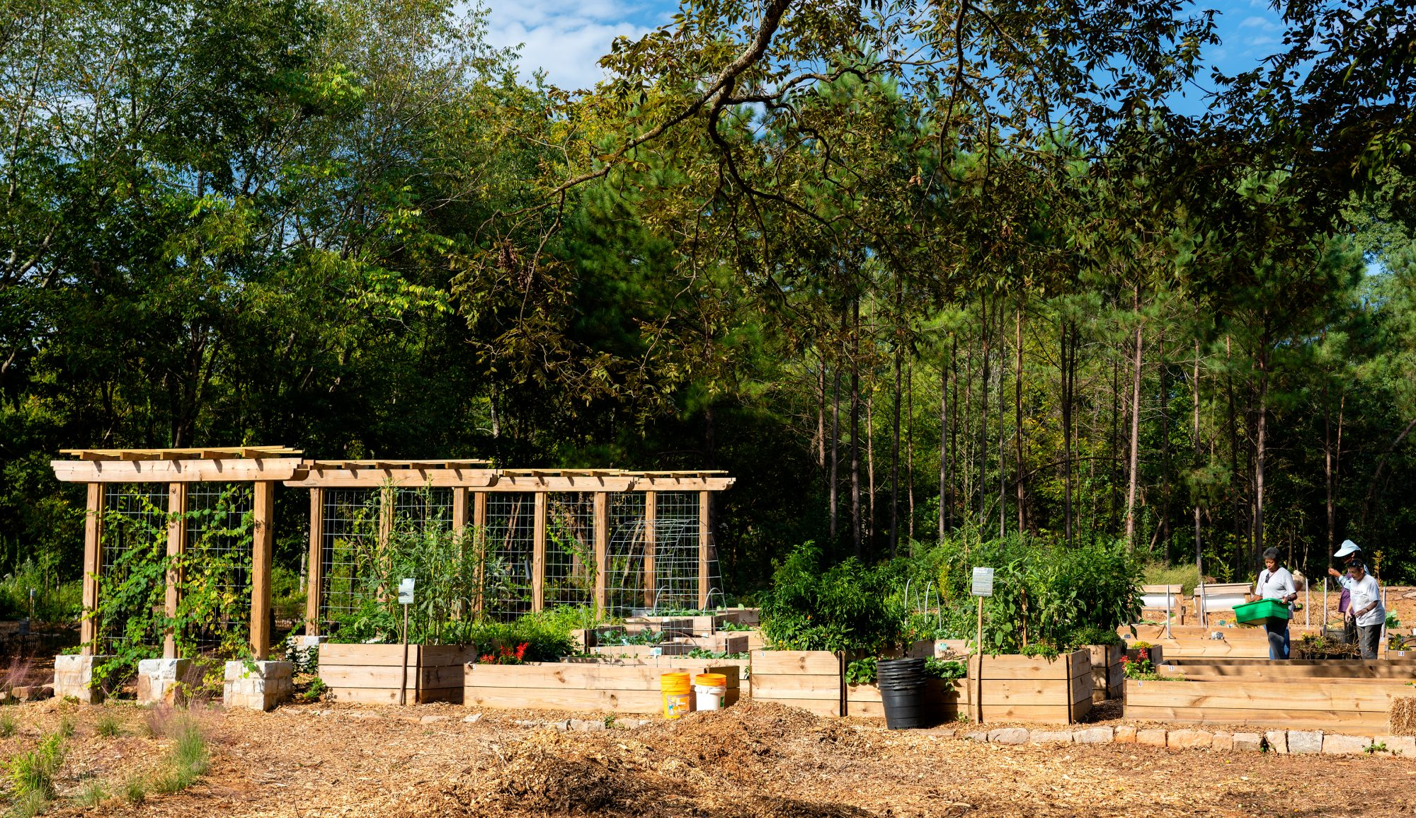 Urban Food Forest at Brown Mills