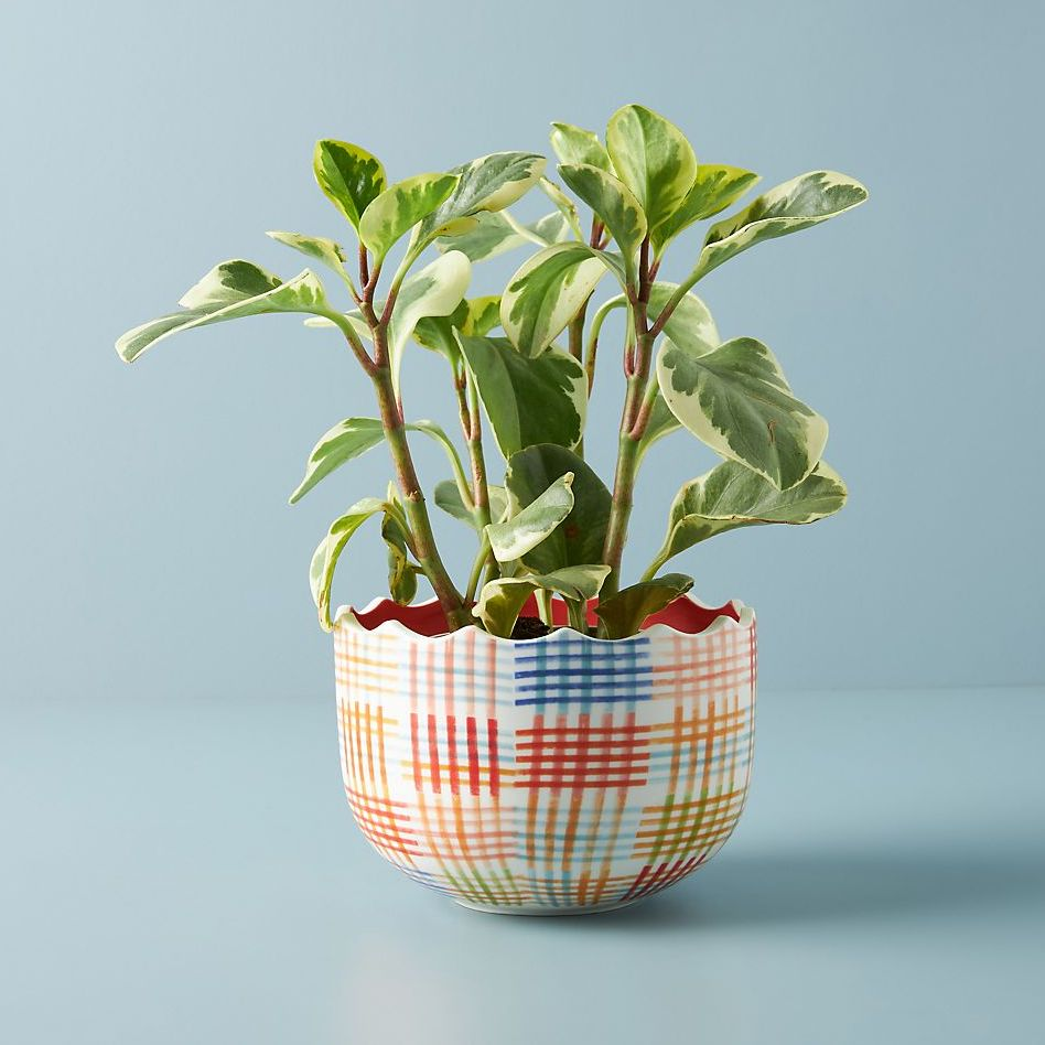 gingham painted planter