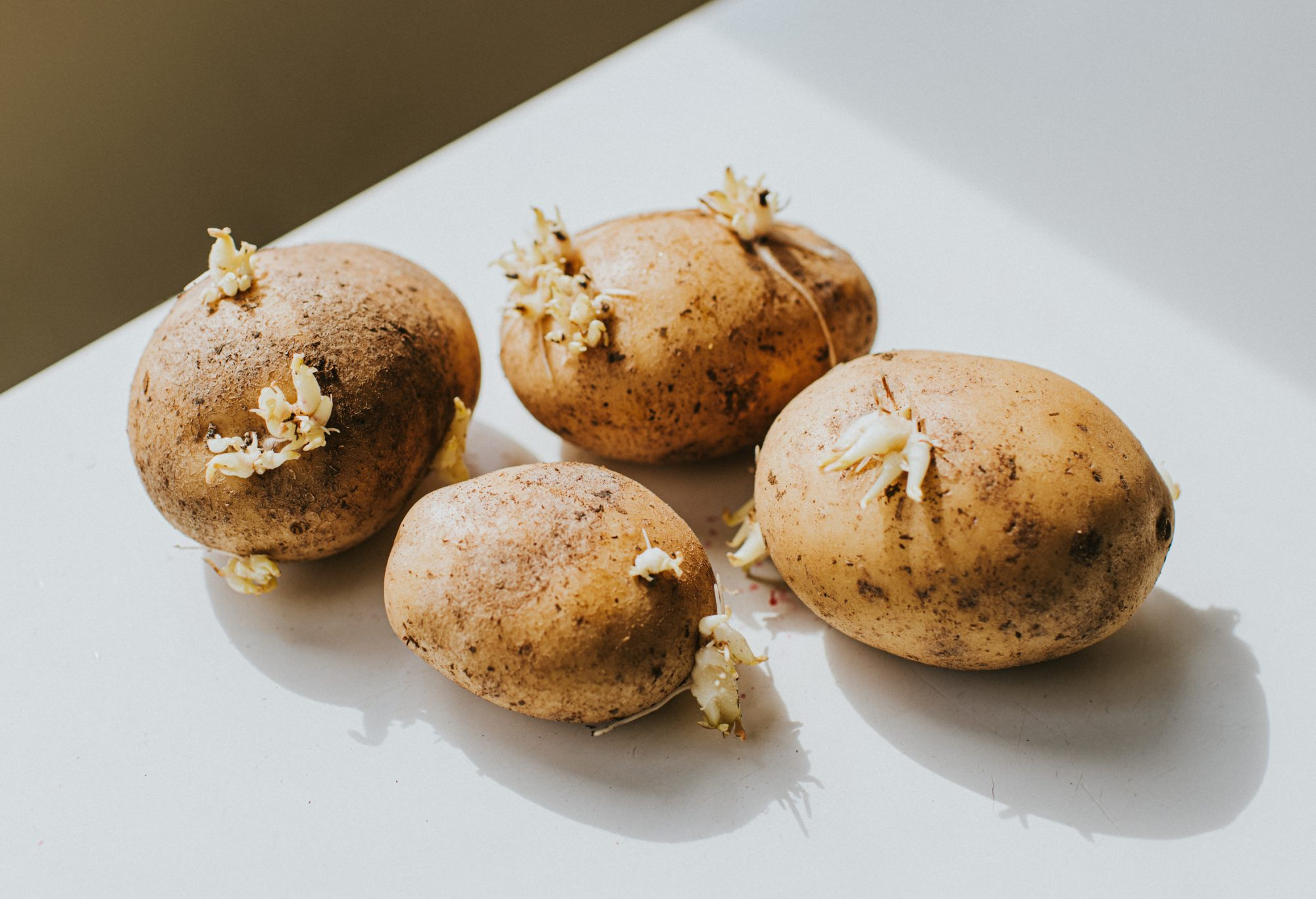 Sprouted Potatoes on a white Surface