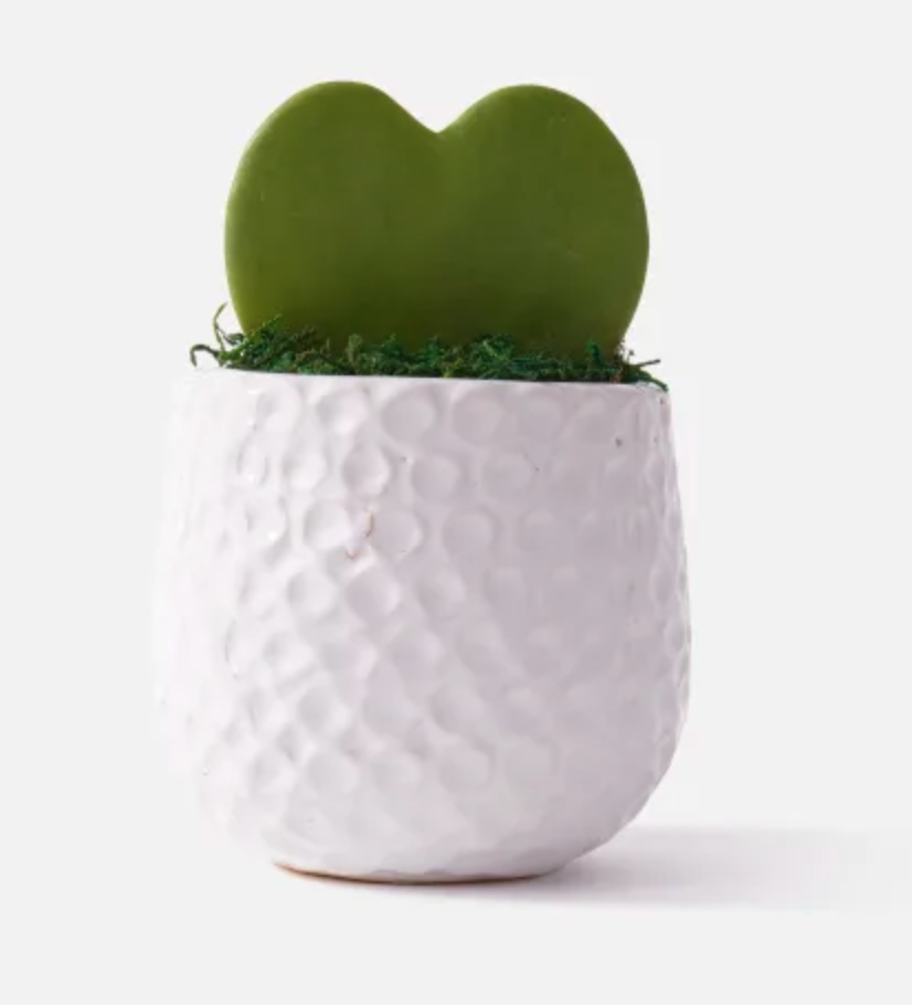 Sweetheart Hoya Is the Perfect Valentine's Day Gift for a Plant Lover