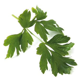 parsley_310.jpg