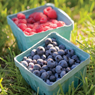 blueberries_container_mj11_310.jpg