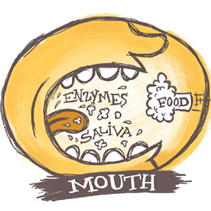Location: Your Mouth