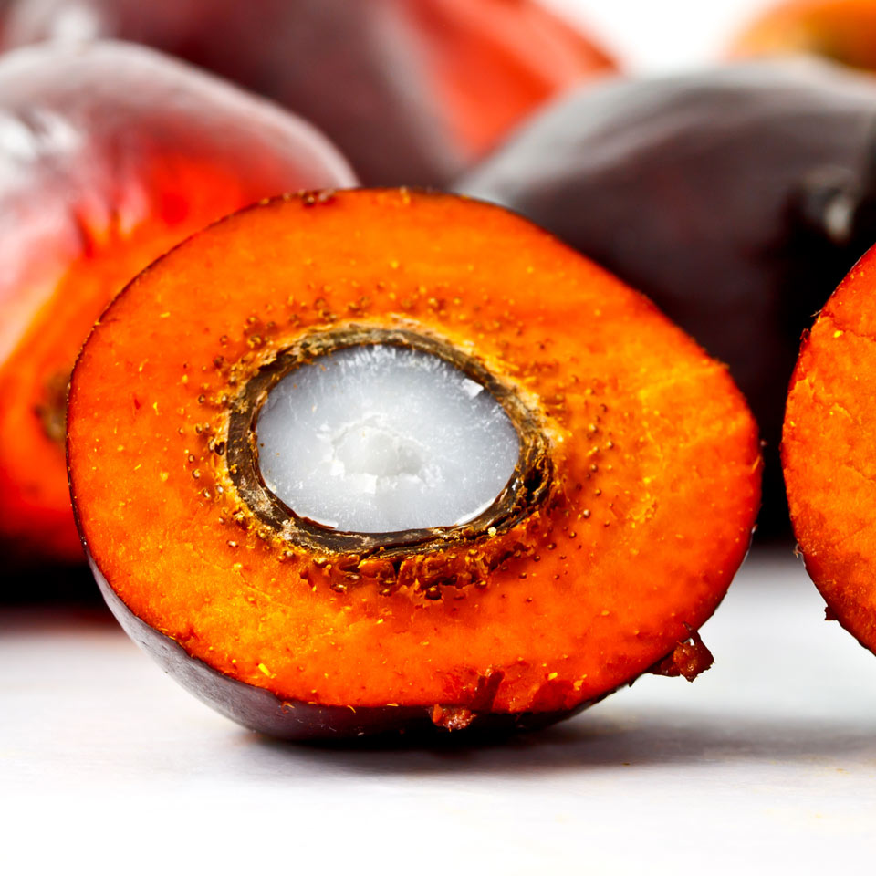 Palm Oil vs. Palm Kernel Oil