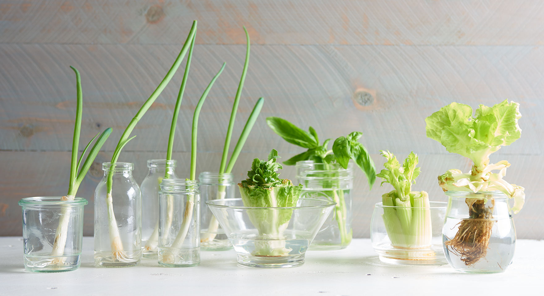 growing plants from veggie scraps