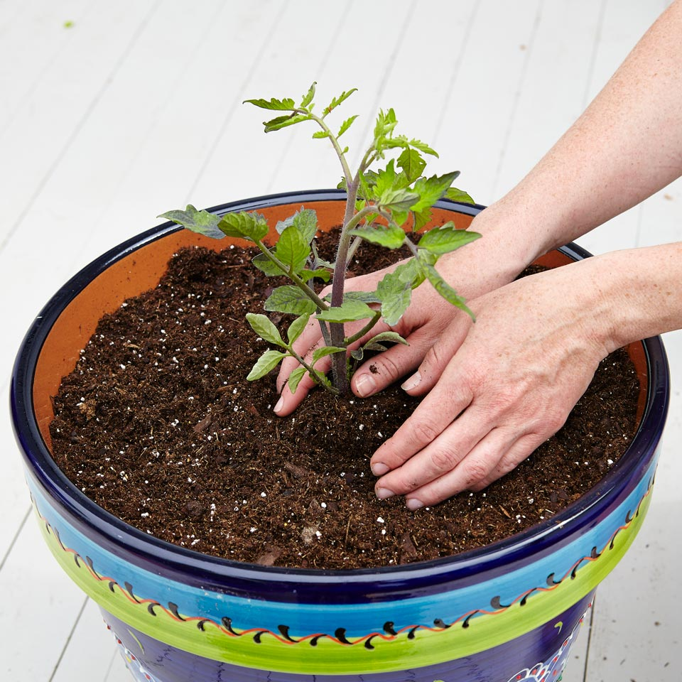 Plant Your Seedlings