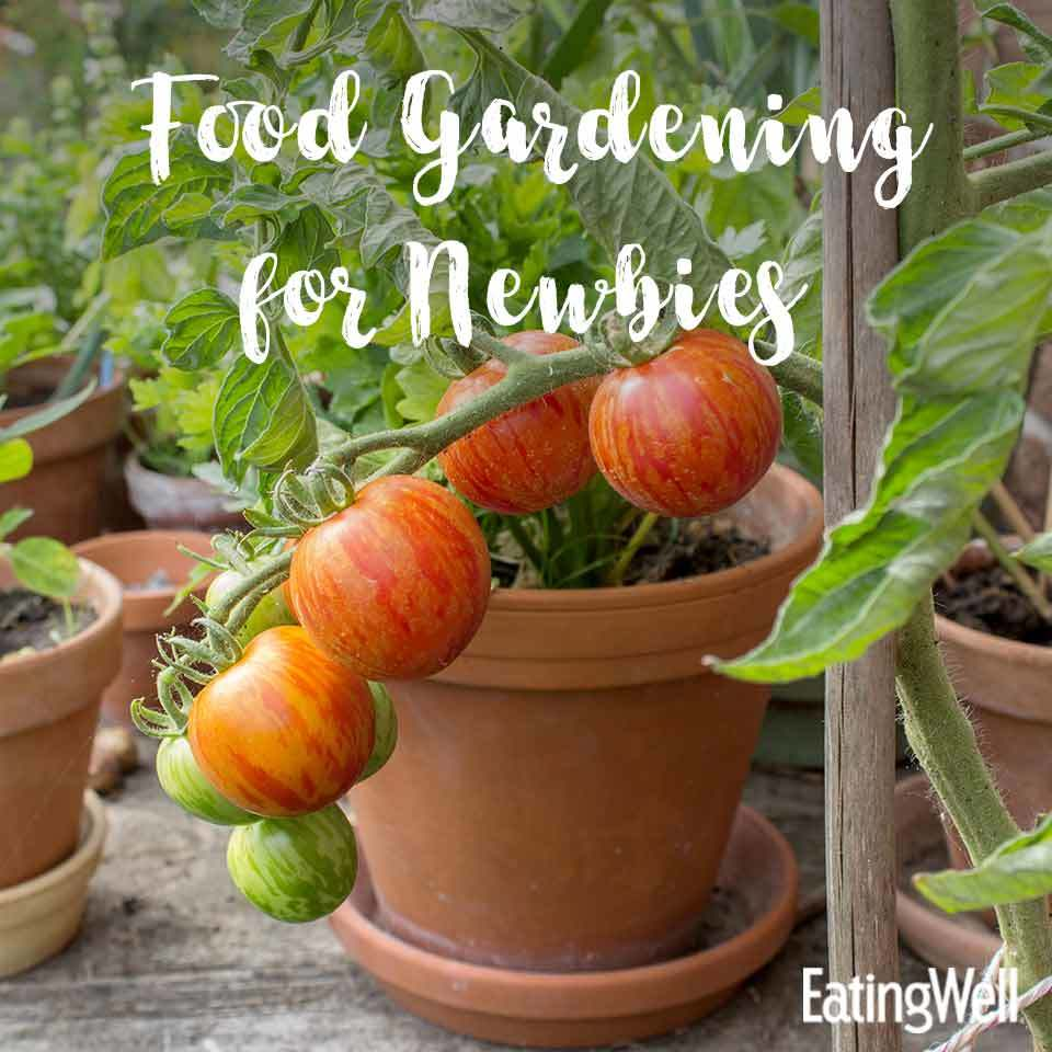 Food Gardening for Beginners