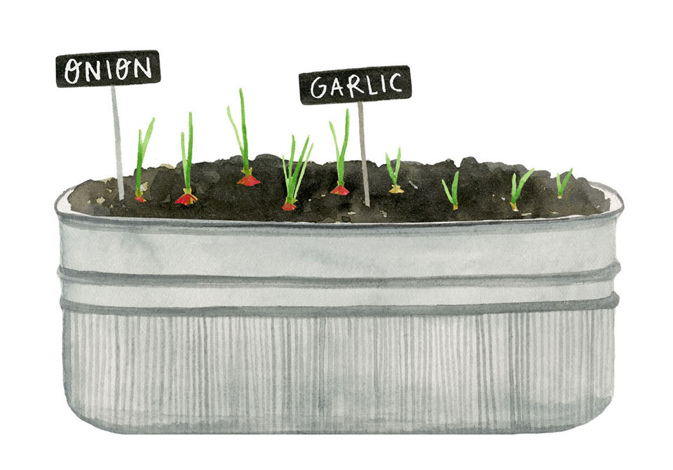 Pot with seedlings