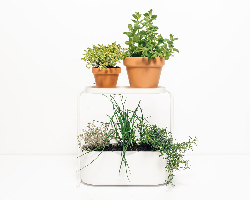 DIY Desktop Herb Garden to Help You Chill Out at Work