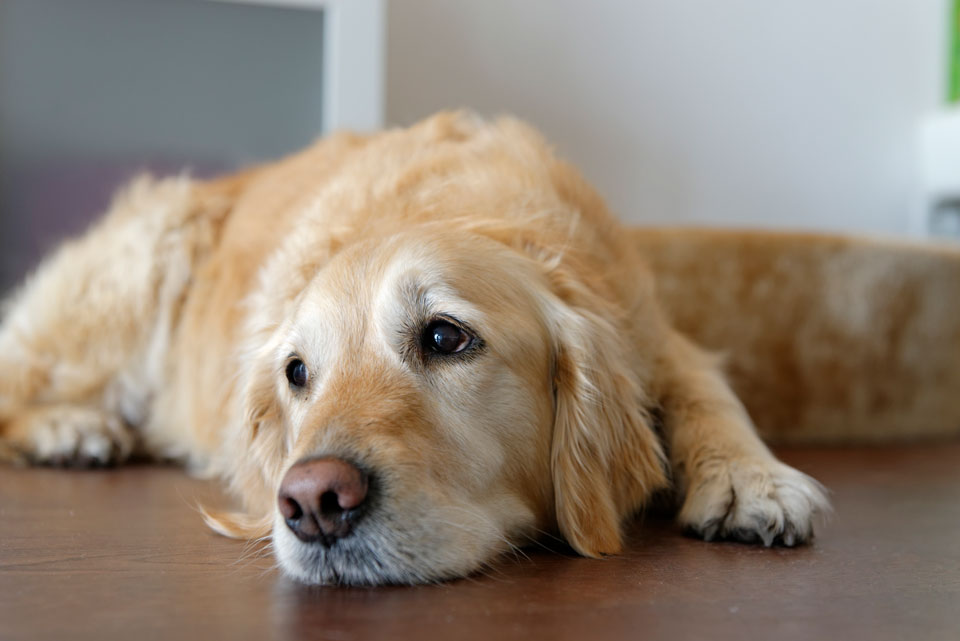 Healthy Pet Treats to Keep Pets Busy While You're at Work and School All Day