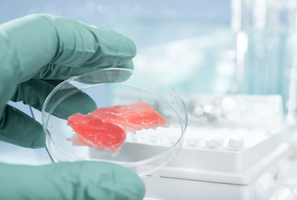 Is Lab-Grown Meat the Future of Sustainable Food, or Just Plain Gross?