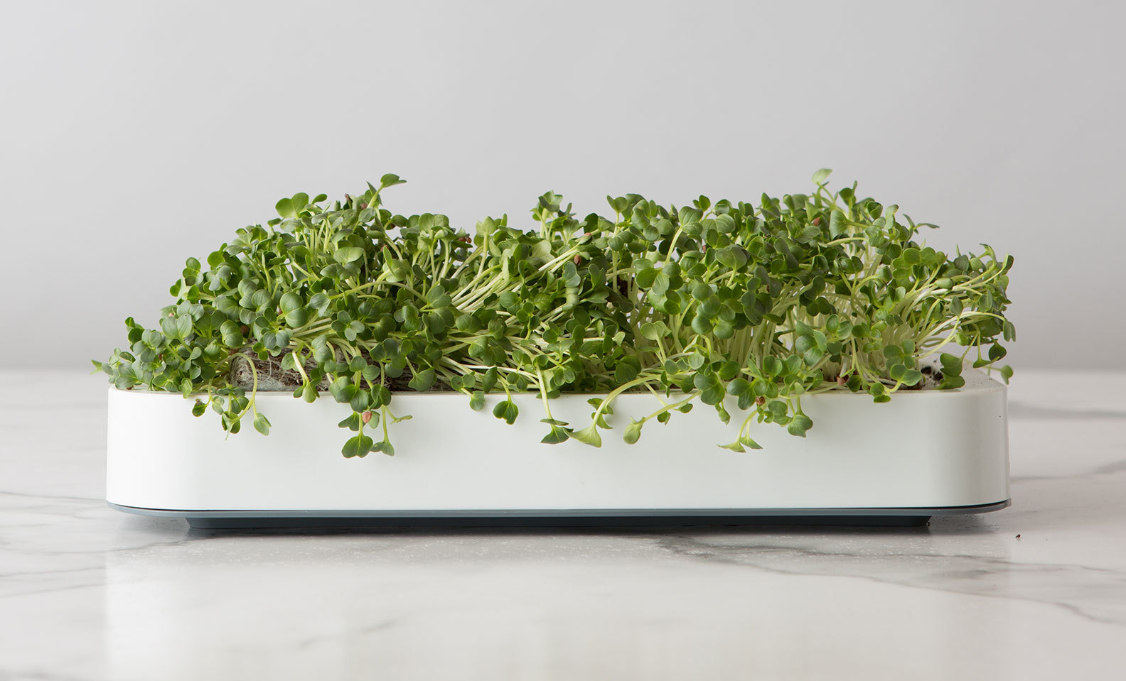 Chef'n Microgreens Growing Kit