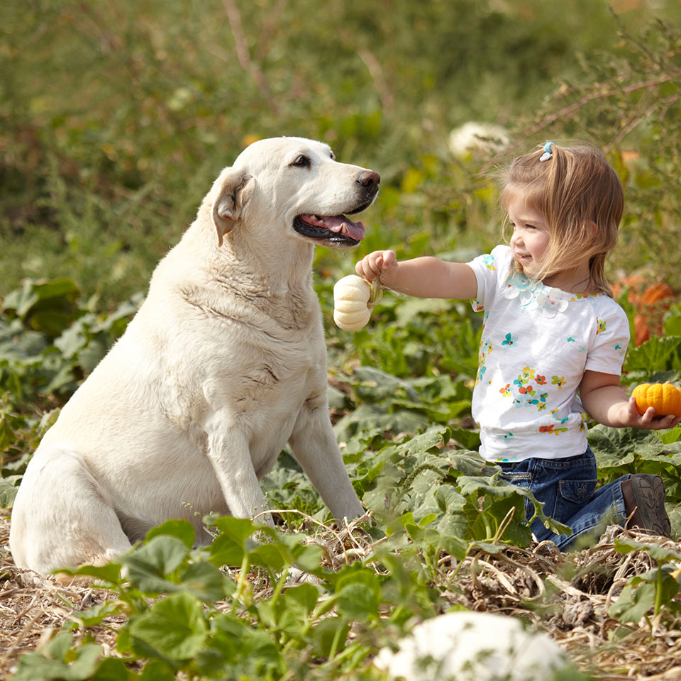 girl and dog in a vegetable garden