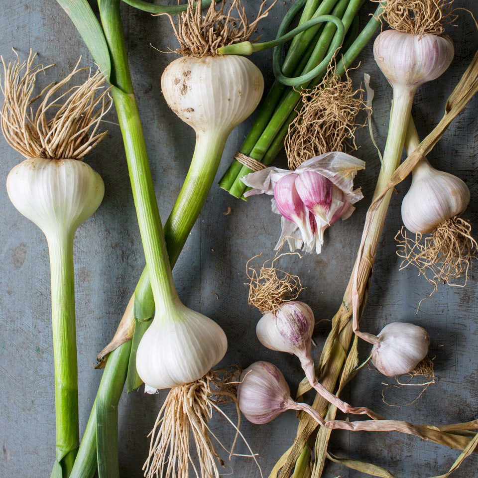fresh garlic on a table
