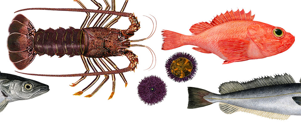 Illustrations of fish, lobster, and other various sea life