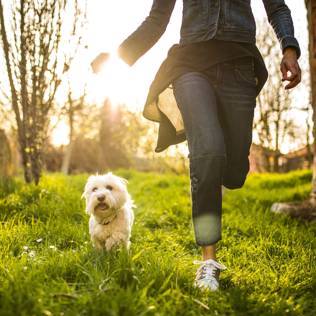 woman running in a sunny field with a dog