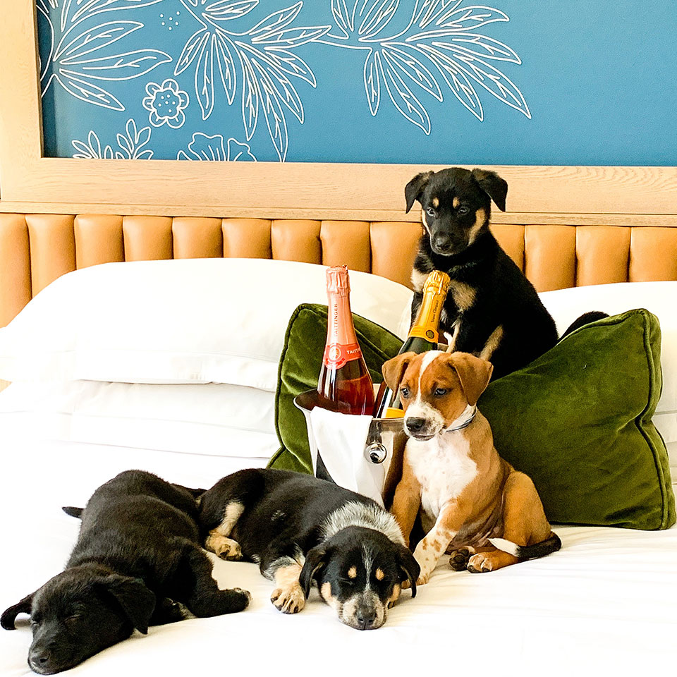 puppies on a bed with a bucket of iced bottles of prosecco