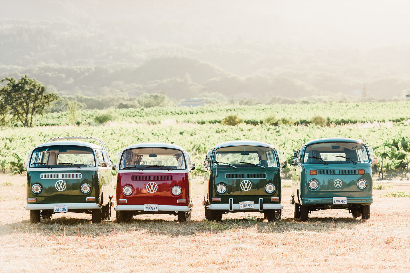 4 VW buses parked next to vineyards