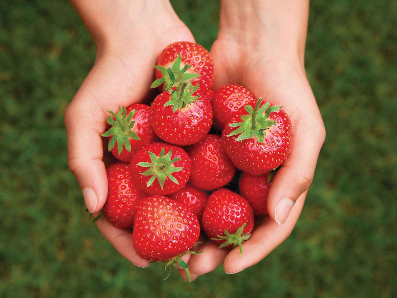 2 hands holding bundle of strawberries