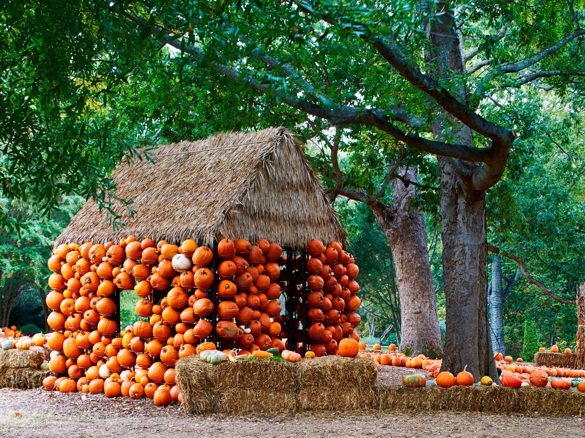 Small house with outside walls covered with pumpkins