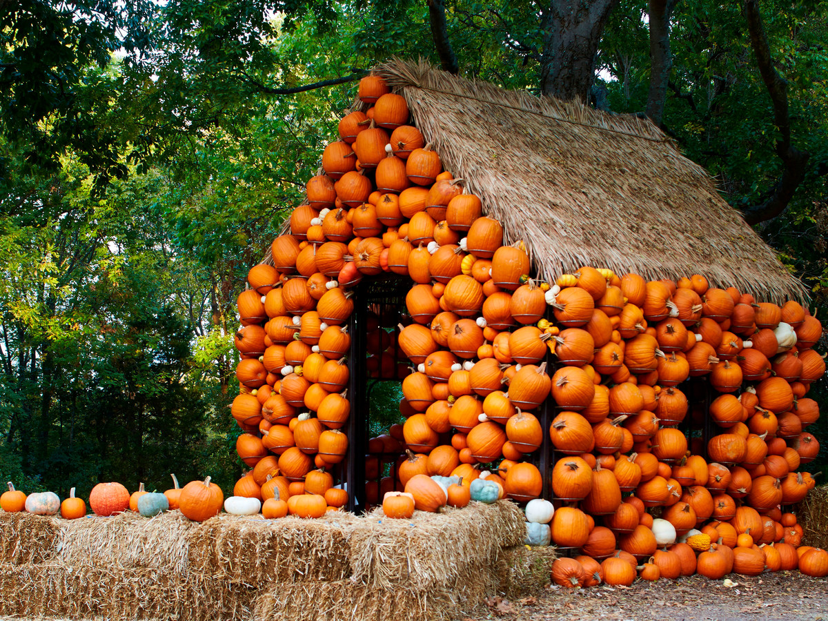 Small hut with pumpkins hanging from walls