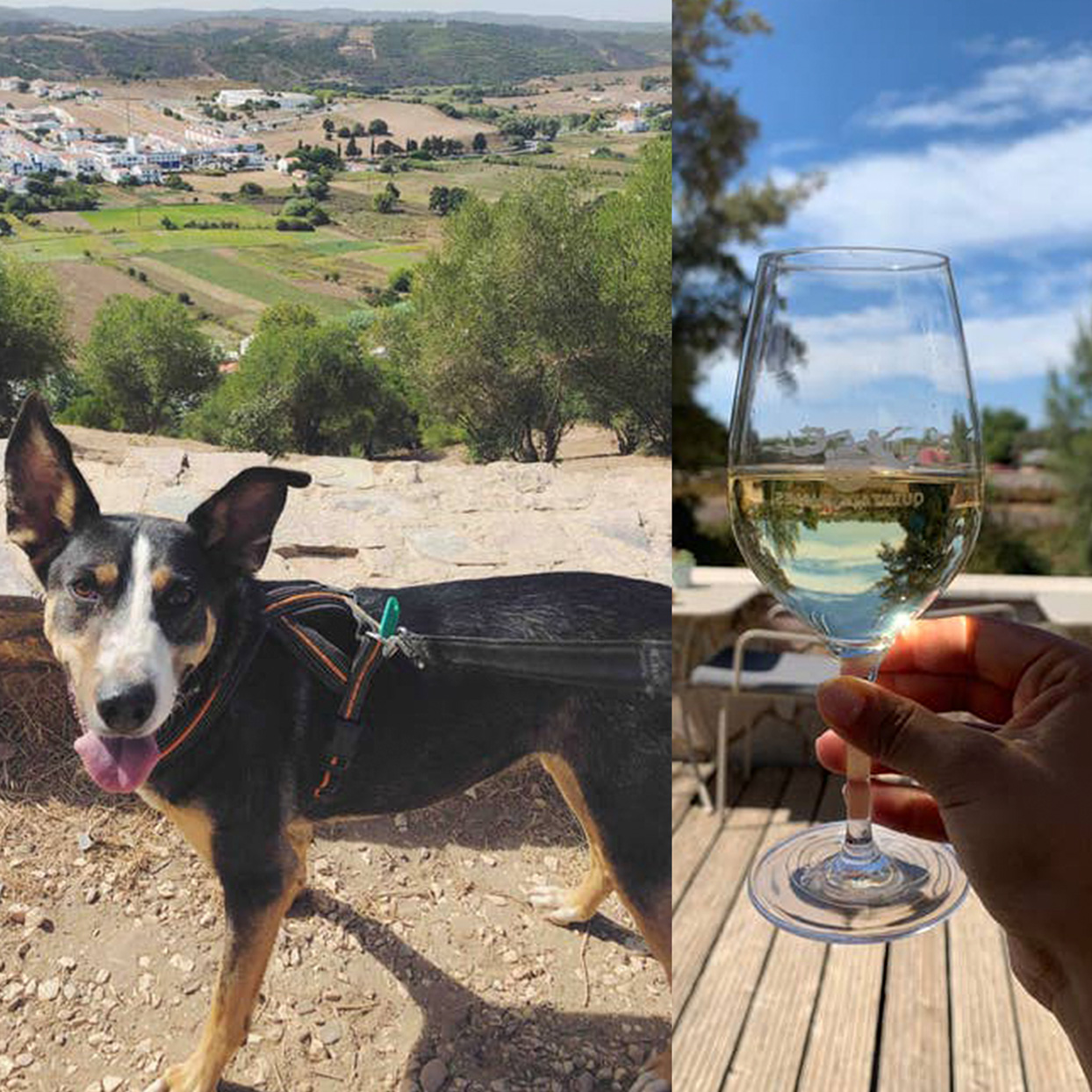 collage of dog with a view of Portugal behind him, collaged with hand holding a glass of wine with beautiful scenery in the background