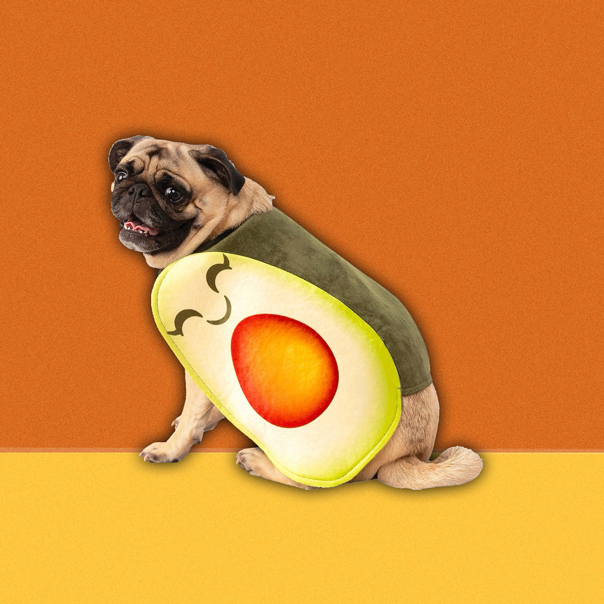 dog with avocado costume