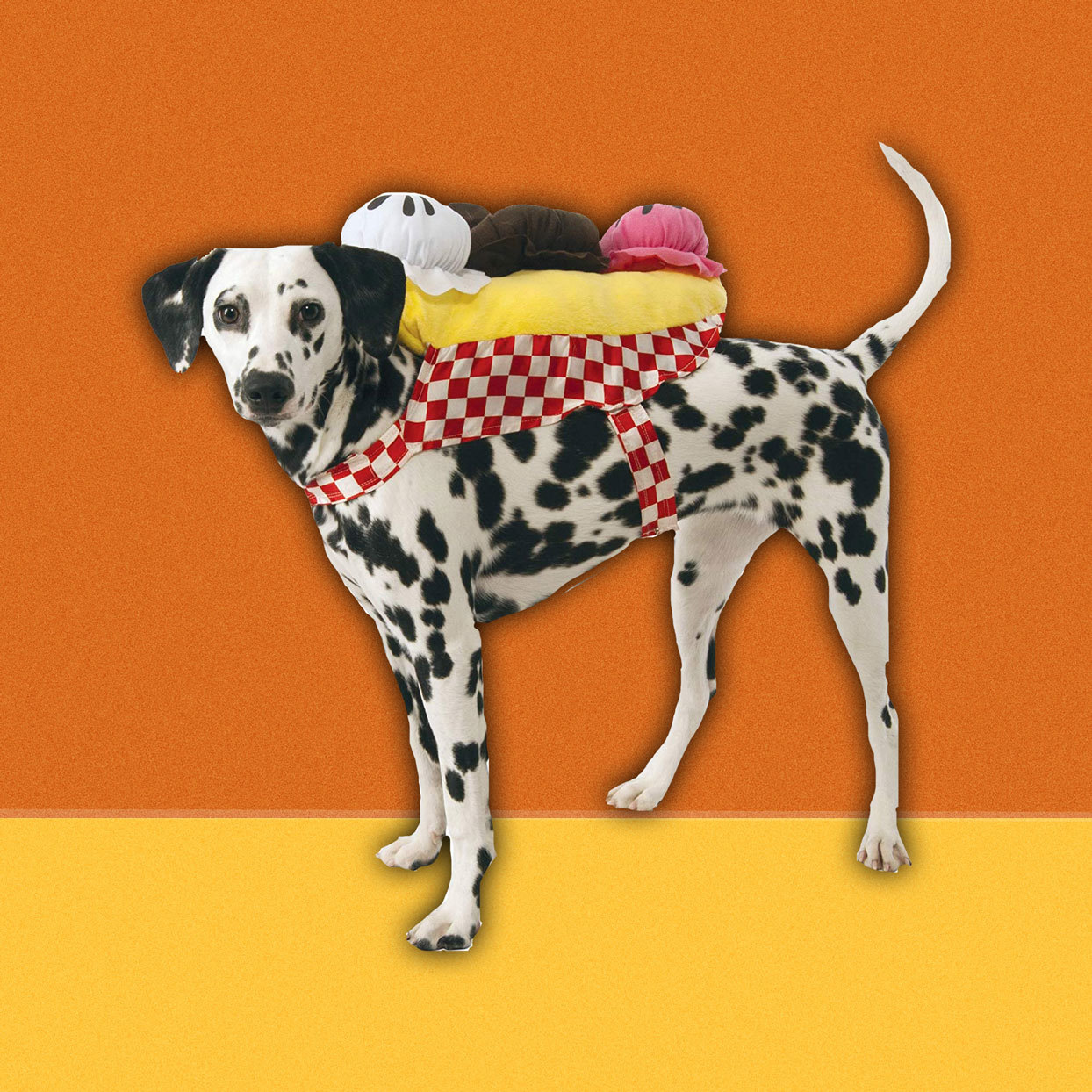 This Halloween costume for the dog is every bit as extra as you are. This banana split costume comes with a scoop of chocolate, vanilla and strawberry ice cream (plush, of course), making your pet the cutest ice cream sundae in town.Prices starting at $14.92