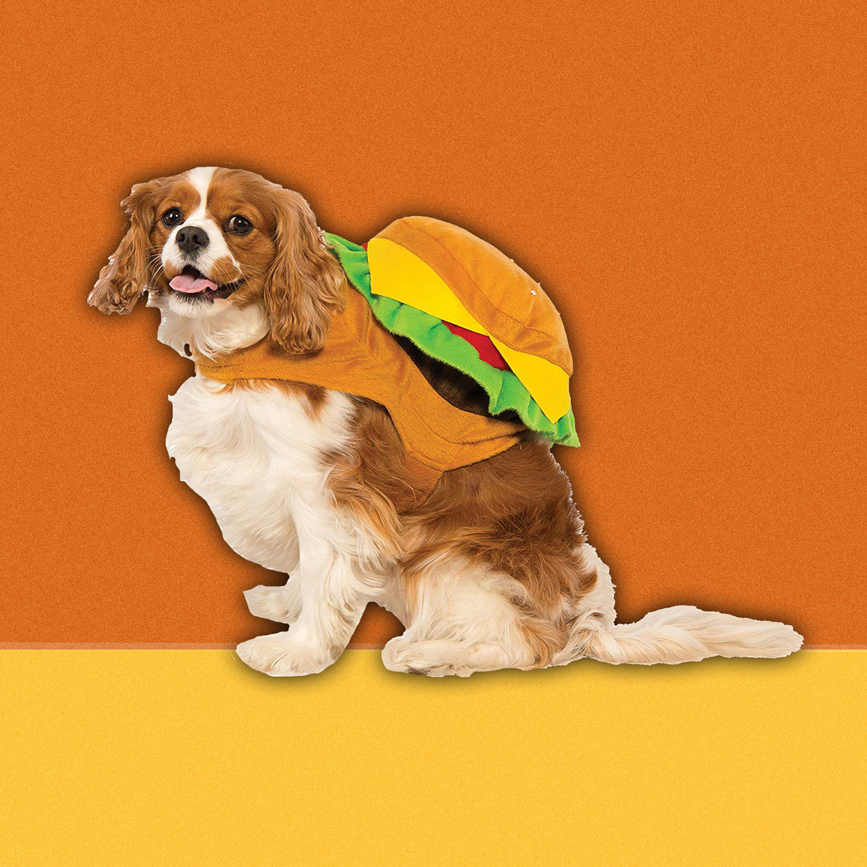 This little hamburger backpack makes a quick and easy Halloween costume for your cat or dog. The costume is easy to attach and you just might be able to get the most skittish of pets dressed up for the holiday.$12.99