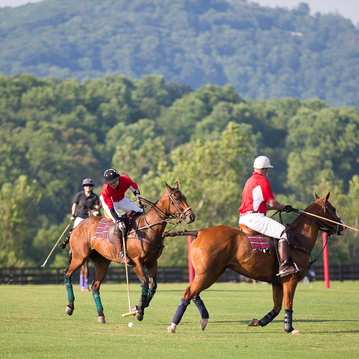 People riding horses playing polo