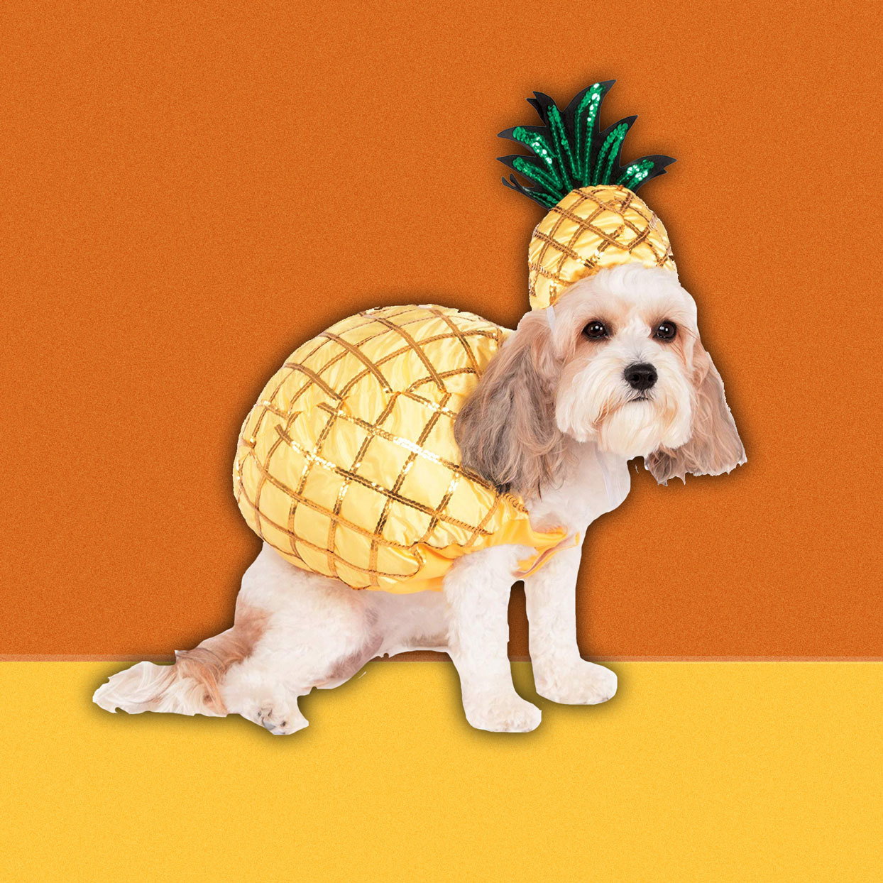 dog wearing a pineapple costume